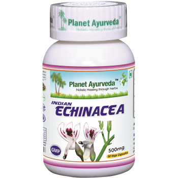 indian_echinacea